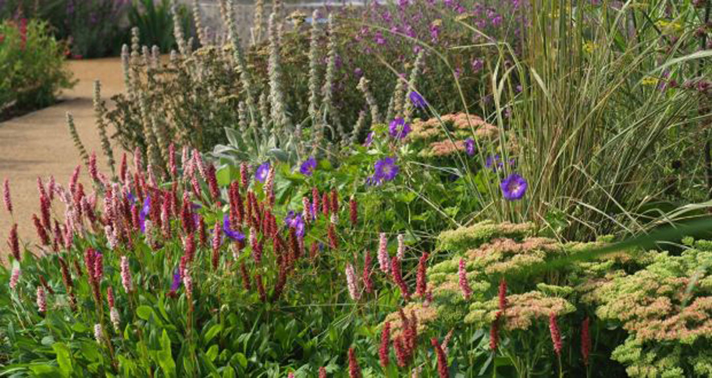 A Kildare hospice garden that soothes the soul