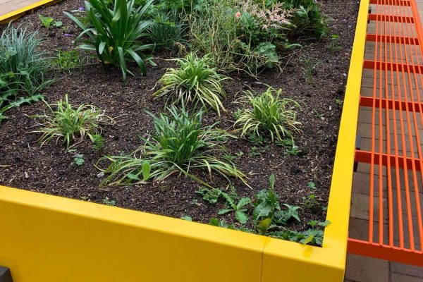 bright and colourful mental health garden